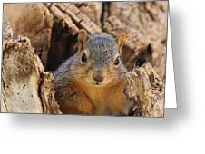 Baby Fox Squirrel Greeting Card