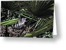 Baby Mockingbird Greeting Card