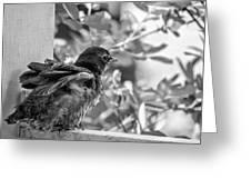 Baby Robin - Revving Up  Greeting Card