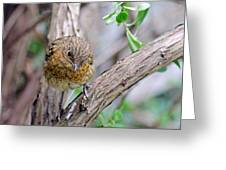 Baby Robin Greeting Card