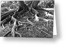 Banyan Roots - 24 X 36 Greeting Card