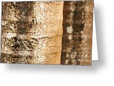 Bark Of A Tree Greeting Card
