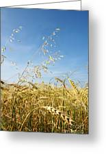 Barley And Oat Vertical Greeting Card
