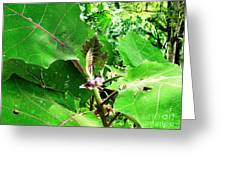 Barriles Flower Greeting Card
