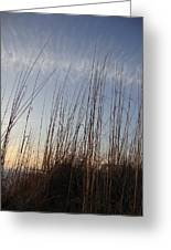 Beach Reeds Greeting Card