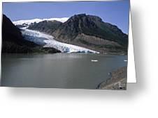 Bear Glacier Greeting Card