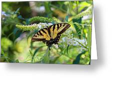 Beautiful Butterfly Pollination Greeting Card