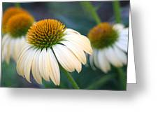 Beautiful Coneflowers Greeting Card