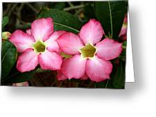 Beautiful Flower Greeting Card