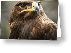 Beautiful Golden Eagle Portrait Greeting Card