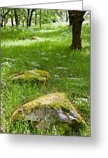 Beautiful Lush Vobrant Image Of Ancient Woodland Greeting Card by Matthew Gibson