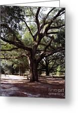Beautiful Oak Greeting Card