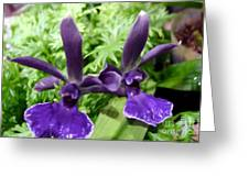 Beautiful Orchid Flower  Greeting Card