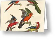 Beautiful Parrots Greeting Card