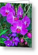 Beautiful Purple Orchid - Phalaenopsis Greeting Card