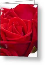Beautiful Red Rose Close Up Shoot Greeting Card