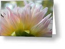 Beauty From Behind  Greeting Card