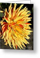 Beauty In The Sun Greeting Card
