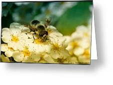 Beauty Of Life Greeting Card