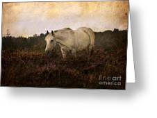Bed Of Heather Greeting Card