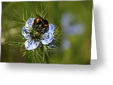 Bee Collecting Pollen Greeting Card