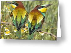 Bee-eaters Greeting Card