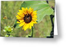 Bee Sunflower Greeting Card