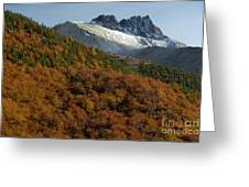 Beech Forest, Chile Greeting Card