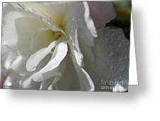 Begonia Named Nonstop Apple Blossom Greeting Card