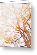 Beneath A Tree  14 5284  Diptych  Set 1 Of 2 Greeting Card