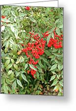 Berry Bush Greeting Card
