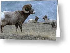 Big Horn Sheep 2 Greeting Card