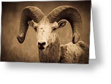 Big Horned Ram Greeting Card