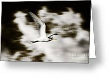 Bird Flying In The Clouds Greeting Card