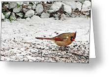 Bird In Winter Greeting Card
