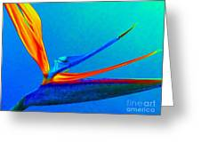 Bird Of Paradise With Blue Background Greeting Card