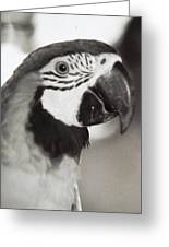 Black And White Parrot Beauty Greeting Card