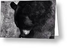 Black Bear Curtsy  Greeting Card