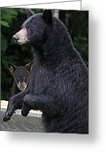 Black Bear With Cub Greeting Card