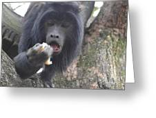 Black Howler Monkey Greeting Card