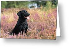Black Labrador Dog Greeting Card