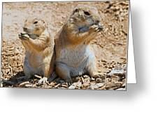 Black Tail Prairie Dogs Greeting Card