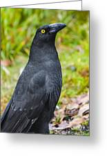Black Tasmanian Crow Standing In Green Forest Greeting Card