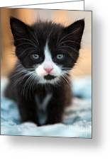 Black And White Kitten Greeting Card