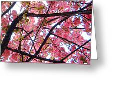 Blossoms And Bark Greeting Card