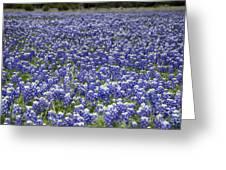 Blue Bonnet Carpet V7 Greeting Card
