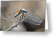 Blue Dasher Greeting Card