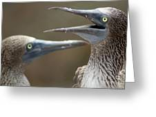 Blue-footed Boobies Greeting Card