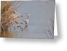 Blue Heron In The Wild Greeting Card