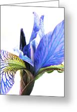 Blue Iris 1 Greeting Card